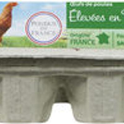 Œufs de poules plein air (Carrefour)