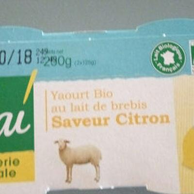 Yaourt au lait brebis citron (Vrai)