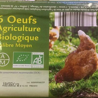 6 œufs agriculture biologique (Sans marque)